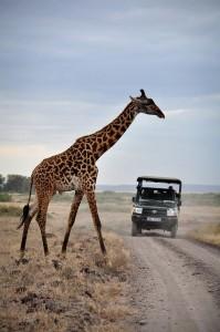 Viajar con niños_Kenia_Fozstyle_viajes